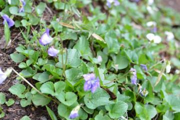 山の花ー11