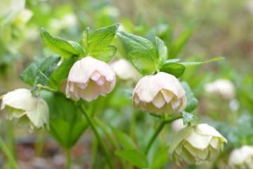 山の花ー9