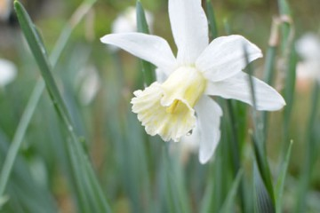 山の花ー5